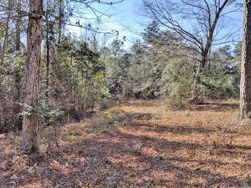 The Gibson Lane Tract : Ozark : Dale County : Alabama