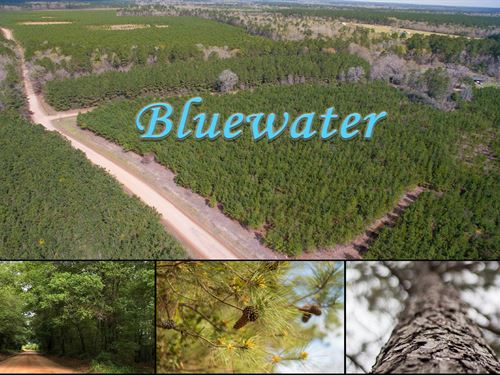 11 Acres Bluewater T2-3 : Livingston : Polk County : Texas