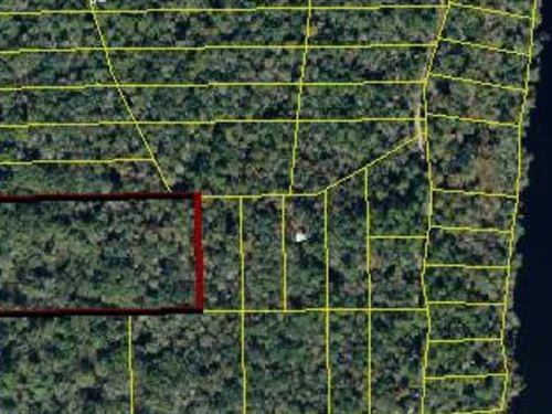5.6 Acres Near Suwannee River : Mayo : Lafayette County : Florida