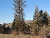 Great Land in The Country : Harpster : Idaho County : Idaho