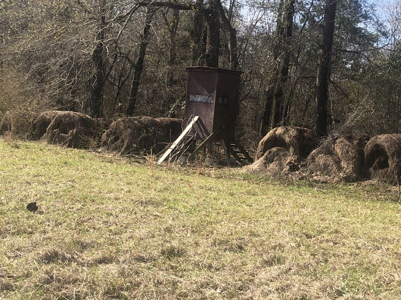 Beautiful Glass Land, Hunters Dream : Brundidge : Pike County : Alabama