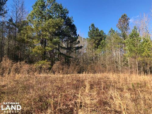 Long Branch Hunting Property : Williston : Barnwell County : South Carolina
