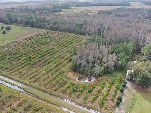 Hidden Grove Road 10 Acres : Clermont : Lake County : Florida