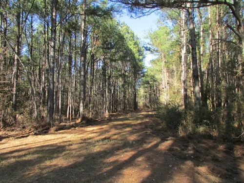 June Burn Road Tract : Manning : Clarendon County : South Carolina