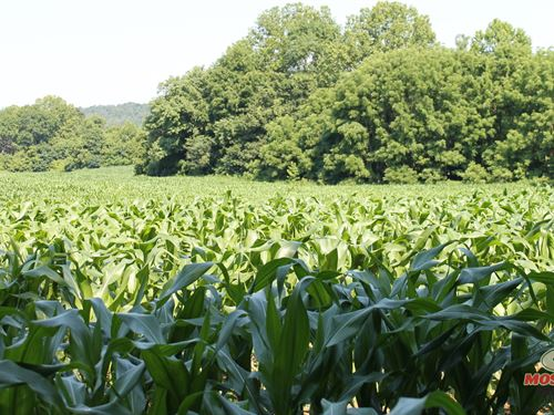 70 Acres Riverfront Cropland OR ho : Falls Of Rough : Grayson County : Kentucky