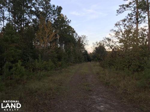 Lake Waccamaw Hunting Land : Lake Waccamaw : Columbus County : North Carolina