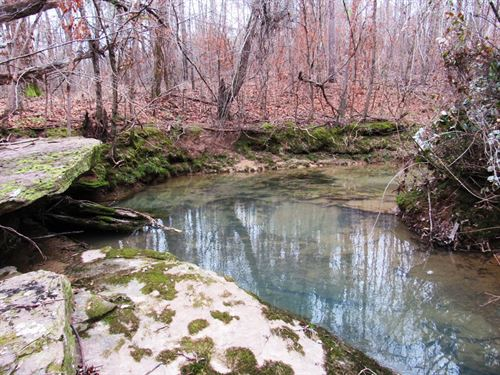 31-003 Armstrong Creek Hunting : Altoona : Etowah County : Alabama