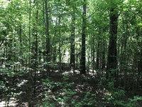 62 Acres on Pace Landing Road in : Belmont : Sumter County : Alabama