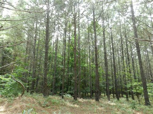 191 Acre Recreational Tract in Boo : Jumpertown : Alcorn County : Mississippi