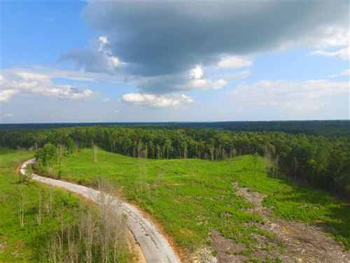 51 Acres Newly Planted Pine : Burton : Prentiss County : Mississippi