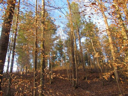 Little Halawaka Creek : Opelika : Lee County : Alabama