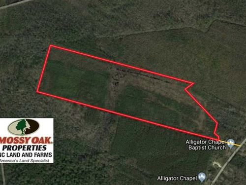 Reduced, 45 Acres of Hunting Land : Columbia : Tyrrell County : North Carolina