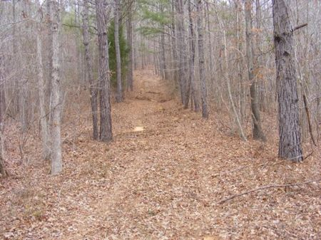78 Acres In National Forest : Marion : Perry County : Alabama