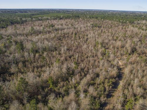 38 Acres Fm 2109 : Huntington : Angelina County : Texas