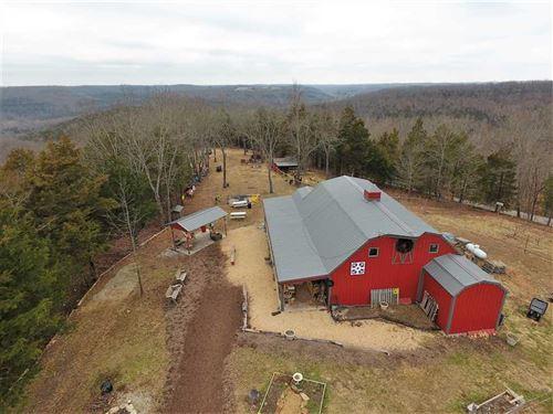 Bear Creek Farms, Apple Orchard : Walnut Shade : Taney County : Missouri