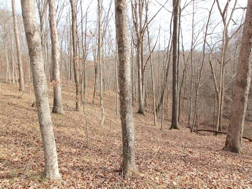 Tr 204, 54 Acres : Willow Wood : Lawrence County : Ohio