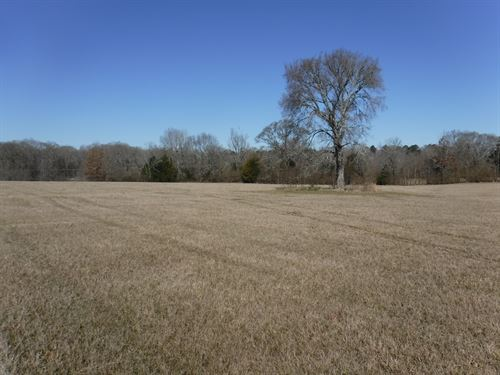 Beautiful Wooded And Open Homesite : Terry : Hinds County : Mississippi