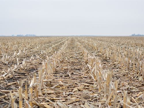 Productive Soils, Open 2019 Lease : Milford : Iroquois County : Illinois