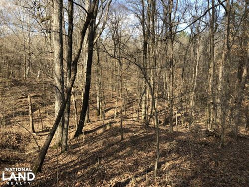 Carrollton Hwy 82 Timber : Carrollton : Carroll County : Mississippi