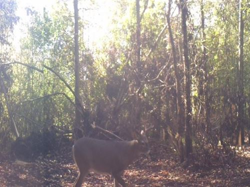 Hunting / Recreational : Bogata : Red River County : Texas