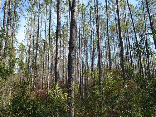 Liberty County 60 Acres : Hosford : Liberty County : Florida