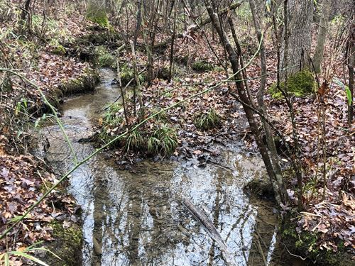 41+/- Wooded Acres In Clay County : Cragford : Clay County : Alabama