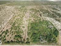 Labelle Farmland Orange Grove : Labelle : Hendry County : Florida