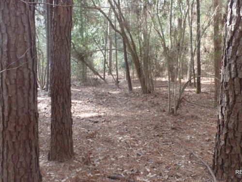 15.2 Ac, Wooded Tract Near Lake Sa : Jasper : Texas