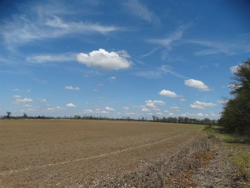 Ag Tract 90 Acres Rice Land : Proctor : Crittenden County : Arkansas