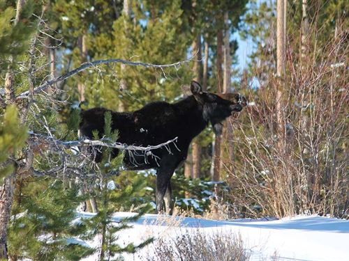 Jackson County Pearl Ranch : Walden : Jackson County : Colorado