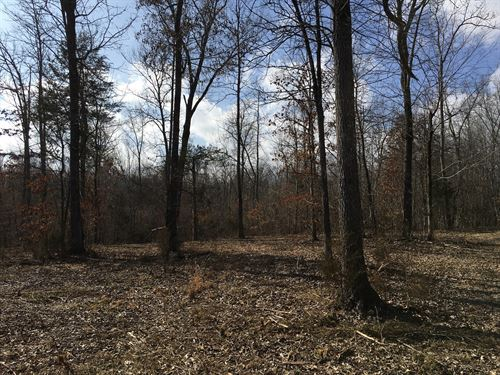 Hunting Land Deer, Turkey Woods : Pocahontas : Randolph County : Arkansas