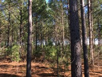 Timberland Investment : Montrose : Laurens County : Georgia