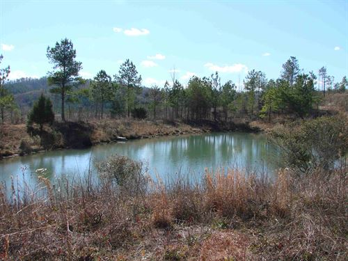 Cheap Hunting & Timber Investment : Brookwood : Tuscaloosa County : Alabama