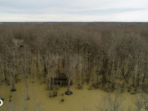 336 Acres Flooded Timber Duck Hu : McCrory : Woodruff County : Arkansas