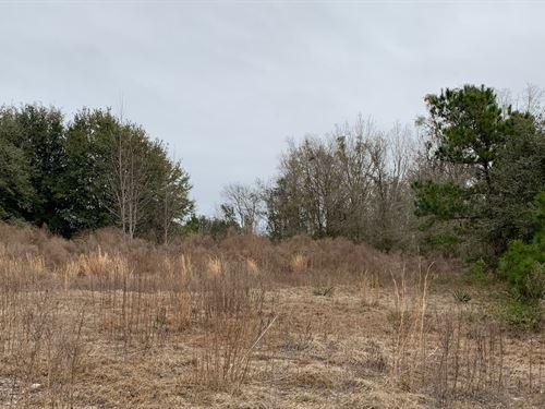 Beautiful 76 Acres, Wooded, Yet : Jasper : Hamilton County : Florida