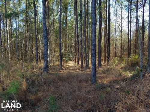 Perote Timber & Hunting Tract : Perote : Bullock County : Alabama