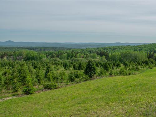 Grand Isle Forest, Maine Land : Grand Isle : Aroostook County : Maine