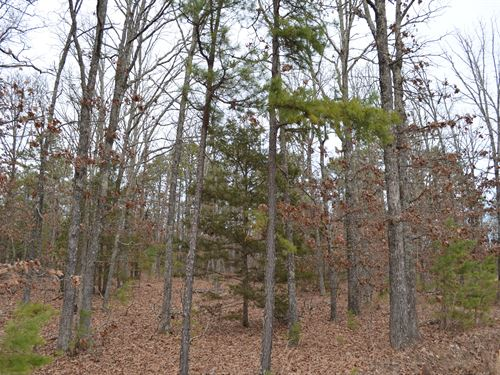 20 Acres M/L, Wooded, Hunting Land : Hartshorn : Texas County : Missouri