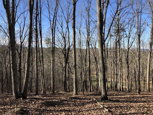 45.73 Wooded Acres Floyd County : Lindale : Floyd County : Georgia