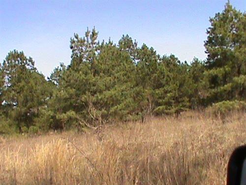 Land, East Texas, Rusk County : Rusk : Texas