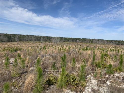 The Waters Longleaf Plantation : Hazelhurst : Jeff Davis County : Georgia