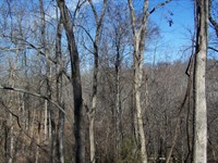 Ozark Hunting & Recreational Land : Marshall : Searcy County : Arkansas