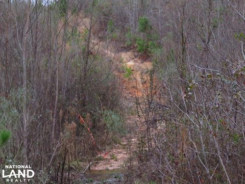 40 Acre Cutover Hunting/Homesite tr : Florence : Rankin County : Mississippi