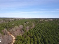 Large Acre Hunting/Timber Tract : Livingston : Polk County : Texas