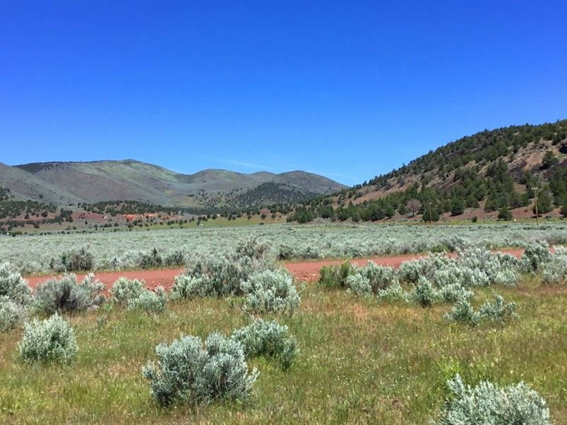 Excellent 40 Ac, Power On The Lot : Farm for Sale by Owner : Termo : Lassen  County : California