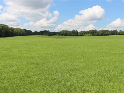 325 Acres In Claiborne County In Po : Port Gibson : Claiborne County : Mississippi
