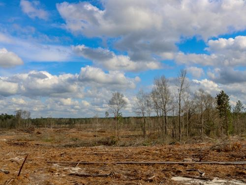 32.5 Acres In Forrest County In Hat : Hattiesburg : Forrest County : Mississippi