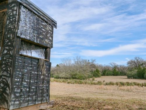 Beautiful 35.97 Acres : Lexington : Lee County : Texas