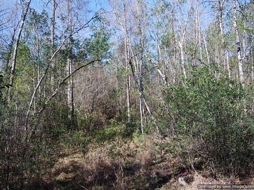 Beautiful Acreage : Poplarville : Pearl River County : Mississippi