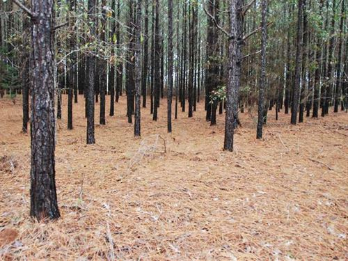 Beautiful Hunting And Investment : Billingsley : Autauga County : Alabama